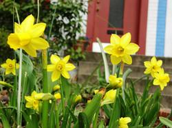 yard-helpers-will-help-you-plant-flowers-too.jpg