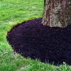 mulch-around-tree.jpg