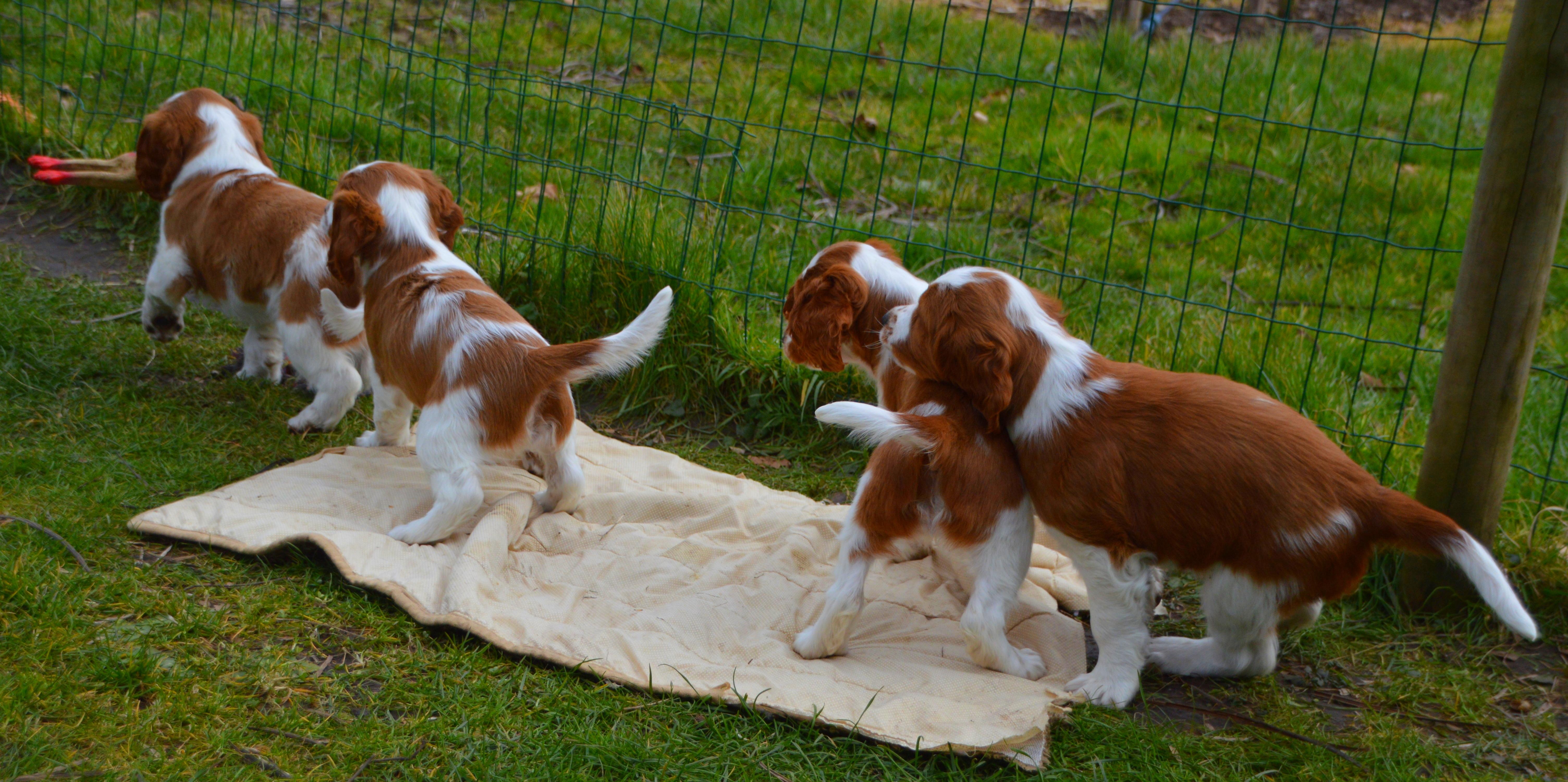 Puppy walking through grass