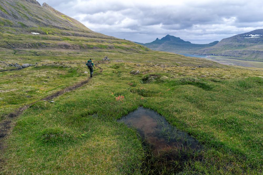 Réserve naturelle d'Hornstrandir -L'Islande hors des sentiers battus