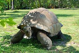 giant-turtle.jpg