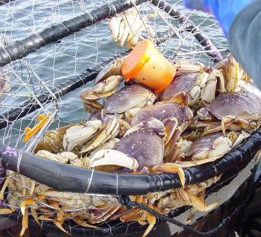 crabpot.jpg