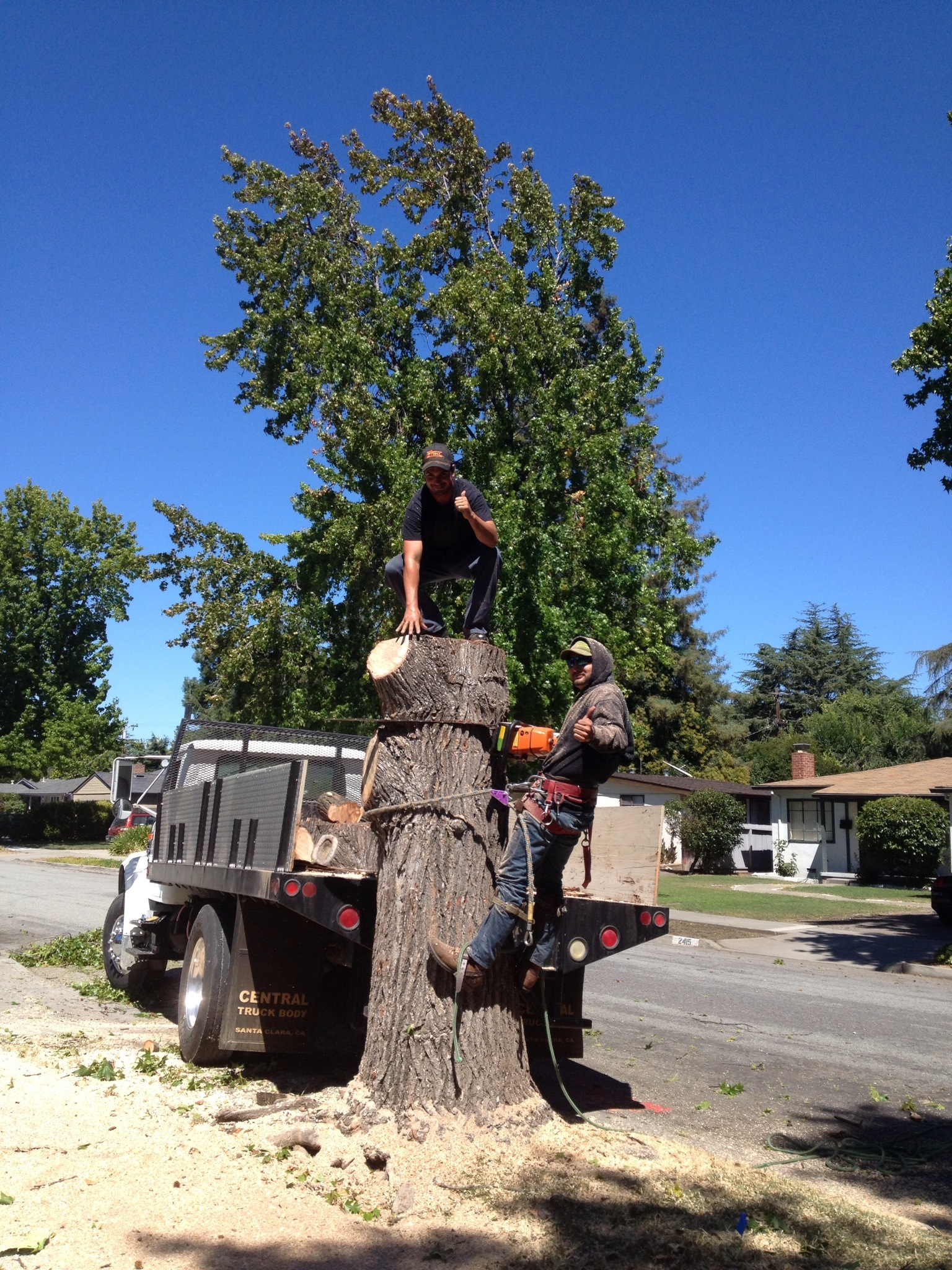 Los gatos Tree Service
