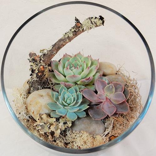 Succulent and/or Air Plant Terrarium