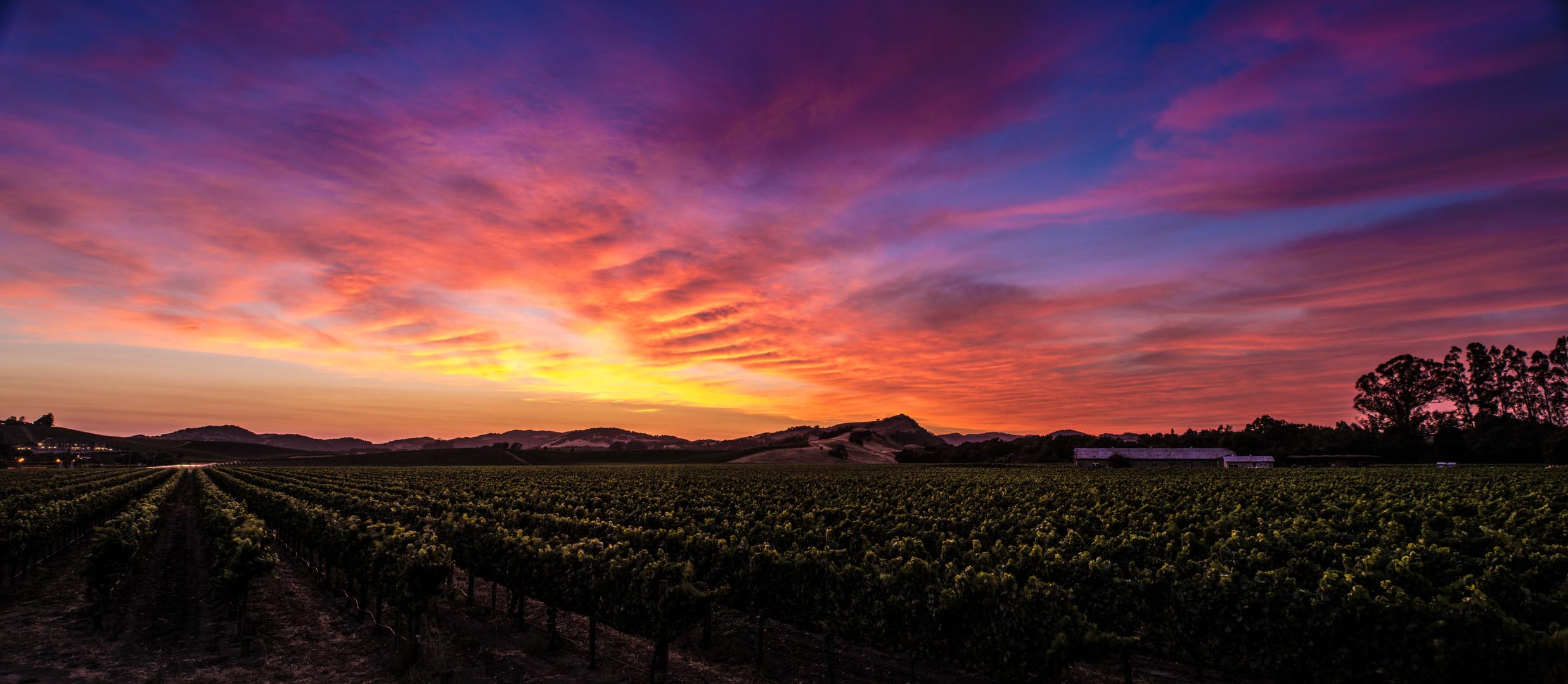 NAPA sunset.jpg