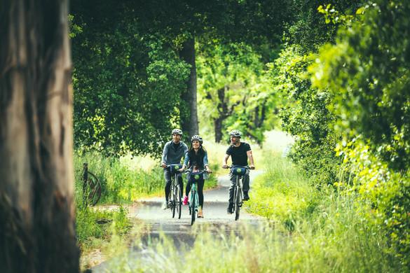 NAPA biking2.jpg
