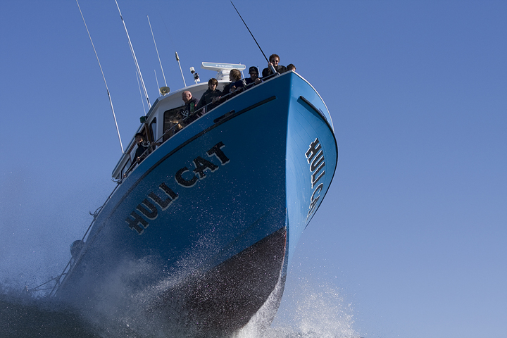 Mavericks Huli Cat