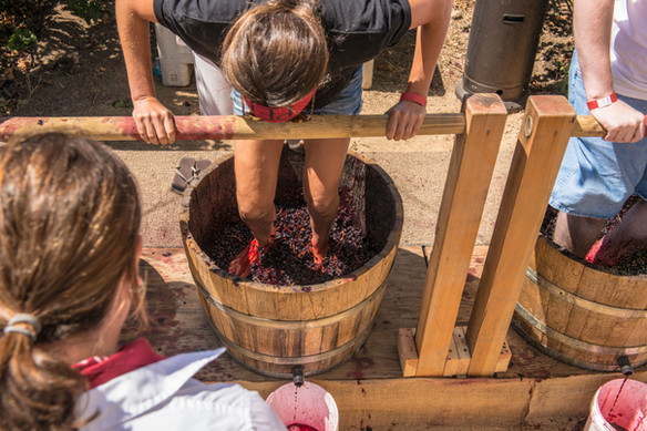 NAPA wine crushing.jpg
