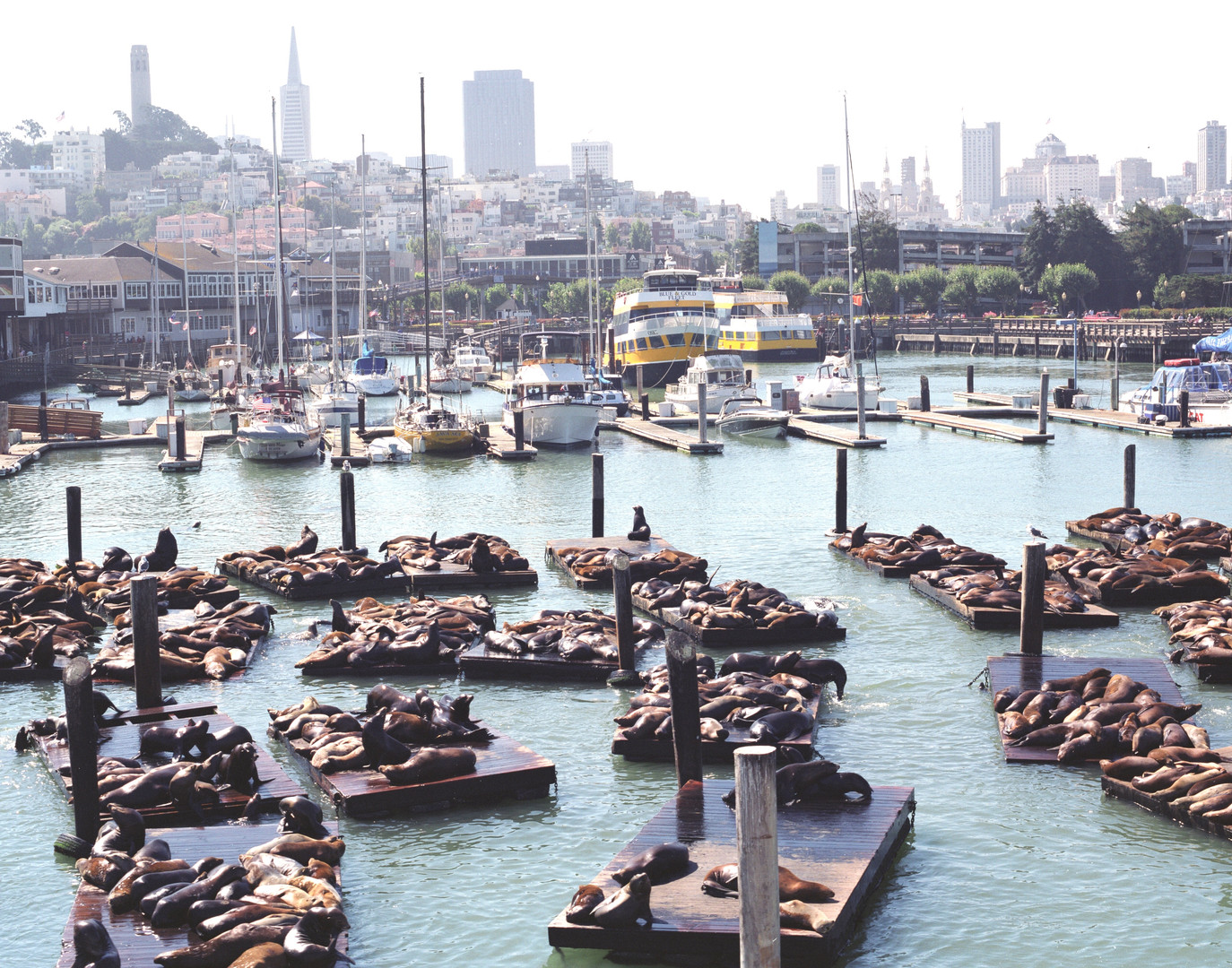 fisherman's wharf sea lions.jpg