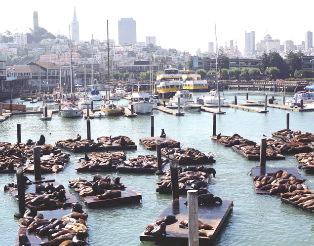 fisherman's wharf sea lions.jpg
