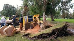 Bay Area Stump Removal