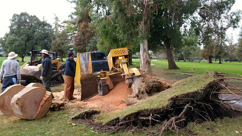 winterize trees, tree service, stump removal, tree safety, tree pruning