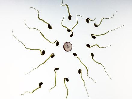 sperm and egg.jpg
