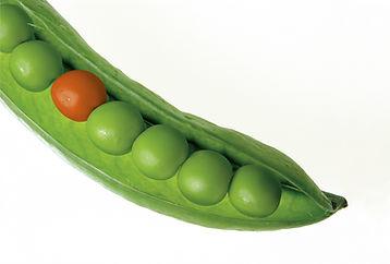 peas-mendel.jpg