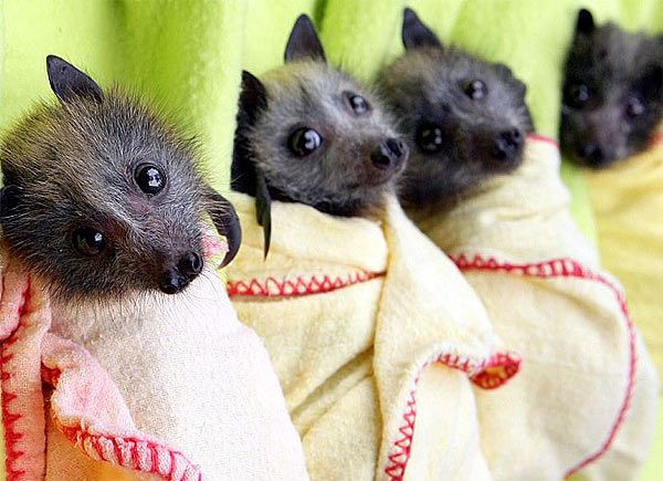 Swaddled Baby Rescue Bats - Image Source: NBC News