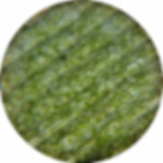 plantcells.jpg