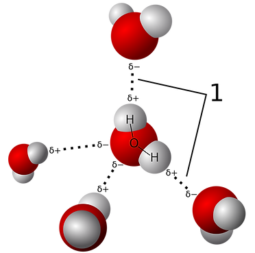 water-hydrogen bonds.png