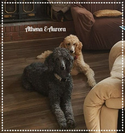 Athena and Aurora