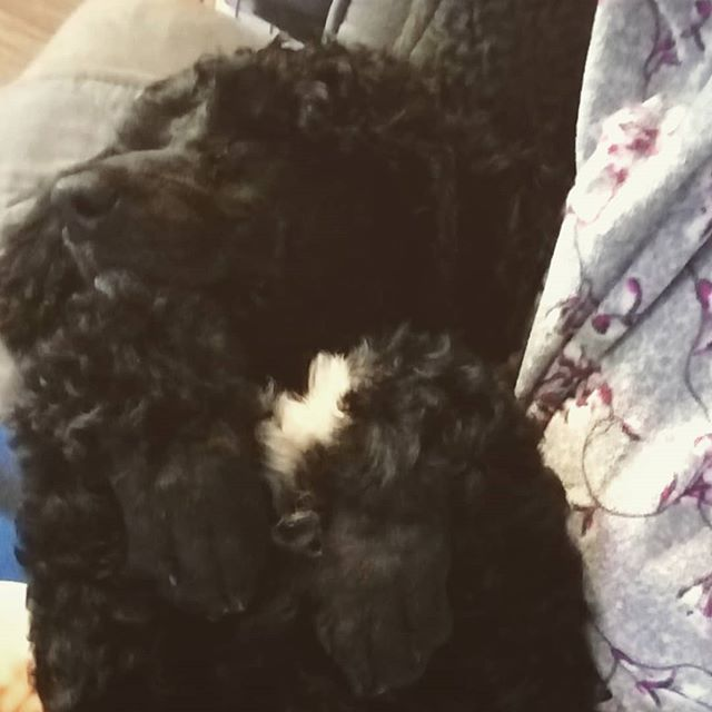 Such a cuddlebug 😍 #instagood #dogsofin