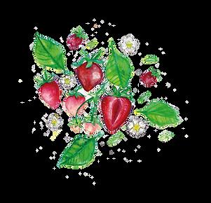 strawberries-01.png