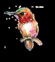 Hummingbird-01.png