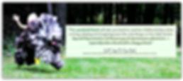 Run Dog! Run! (an adventure) chilldren's book by Melissa Yeomans