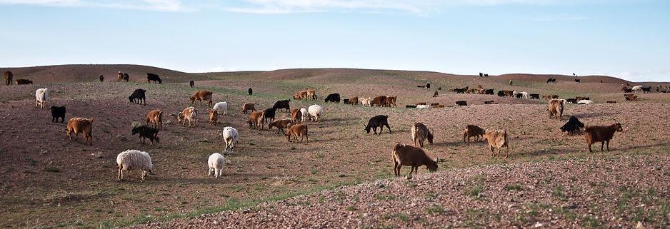 Mongolie 011.jpg