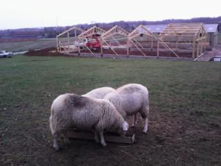 Travaux bergeries scène II