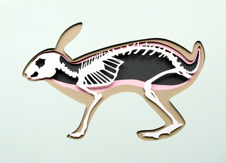 rabbit02.png