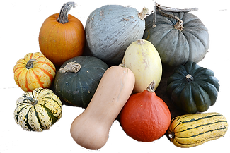 Winter_Squash Mix 02.png