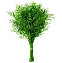 dill-png.png
