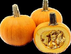 sugar Pie Pumpkin.png