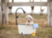 blackwaterdoodlespupbath.jpg