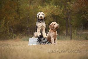 blackwaterdoodlesmoms.jpg