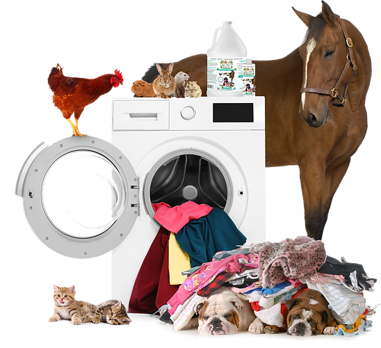 bedding-wash-pets-on-washer_edited.png