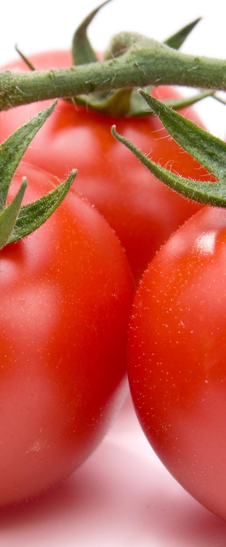 tomato_070