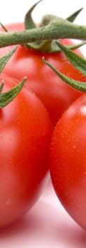 tomato_070.jpg