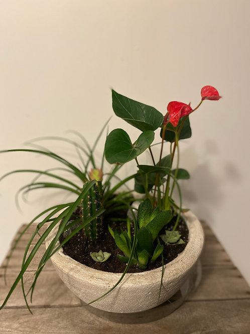 Plant Dish