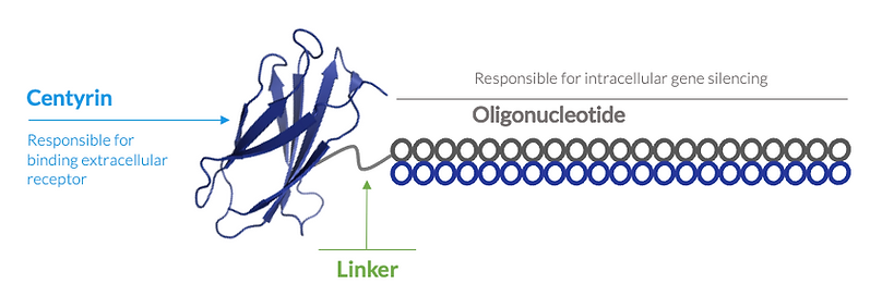 Targeting and delivery of oligonucleotid