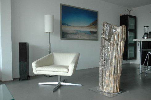 Petrified-wood-import.jpg