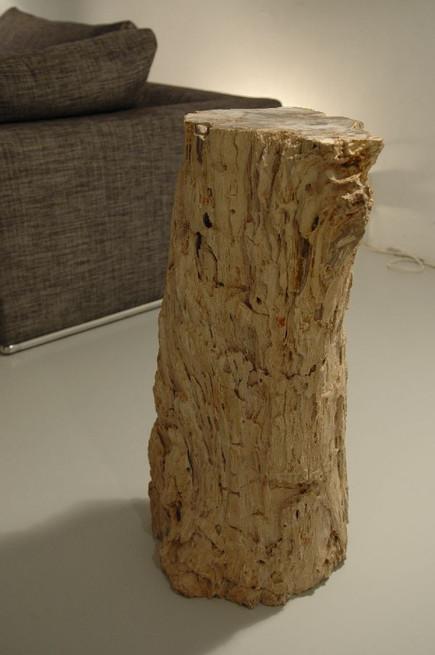 interior madera petrificada.jpg