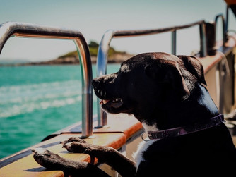 'Captain's Canine' wins photography prize