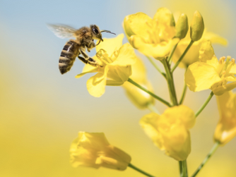 Environmental group given money for bee hives