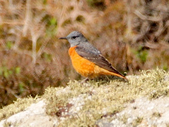 Rare bird sighting causes excitement on Scilly