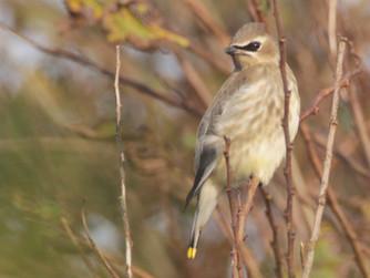 Scilly birding season 'best for 18 years'
