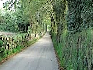 Concern expressed over hedgerow trimming