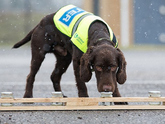 Scilly Councillor suggests water leak detection dog