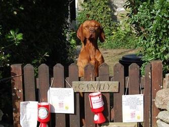 Enterprising dogs raise money for charity