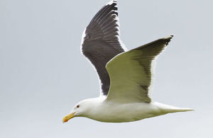 Natural England on Scilly to discuss seabird protection