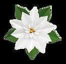 white-poinsettia.png